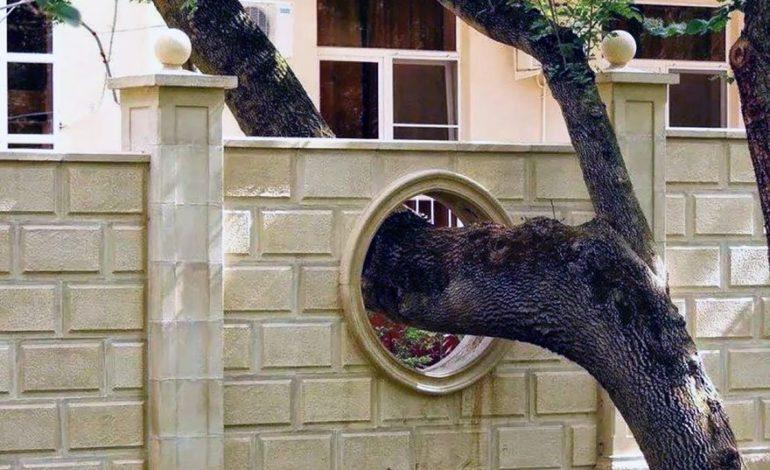 Təbiətə zərər vermədən, ağaçlar üzərində inşa edilmiş tikililər