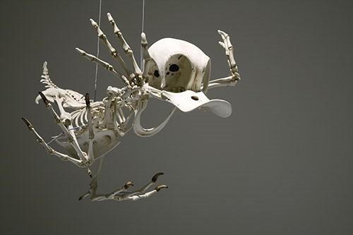 Çizgi film qəhrəmanlarının skeletləri