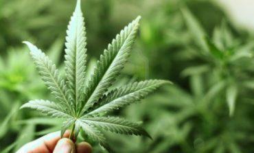 Narkotiklər: marixuana, heroin, kokain, lsd və onların təsiri