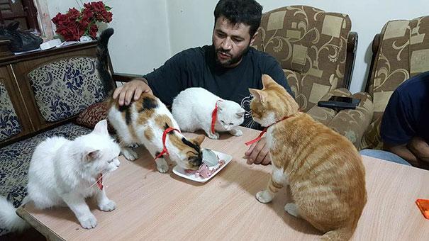cat-man-aleppo-syria-4