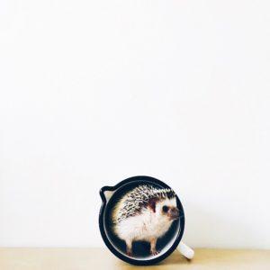 ordinary-hedgehogs-photography-hedgehographer-31