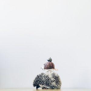 ordinary-hedgehogs-photography-hedgehographer-42