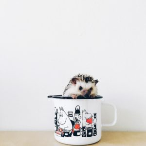 ordinary-hedgehogs-photography-hedgehographer-51