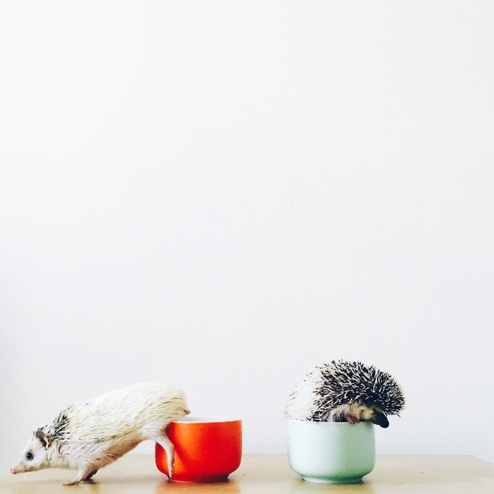 the-ordinary-lives-of-my-ordinary-hedgehogs-10__700