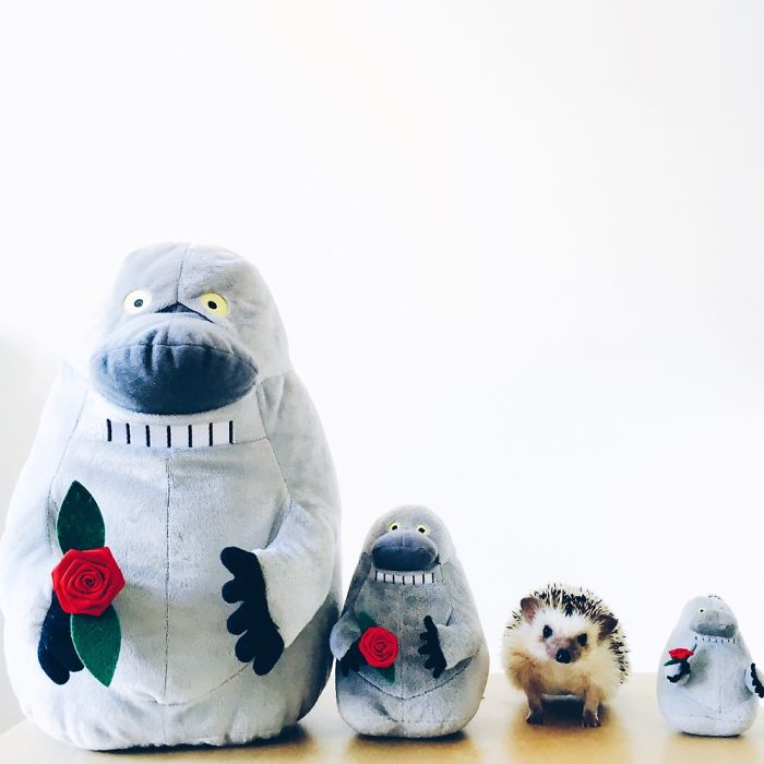 the-ordinary-lives-of-my-ordinary-hedgehogs-4__700