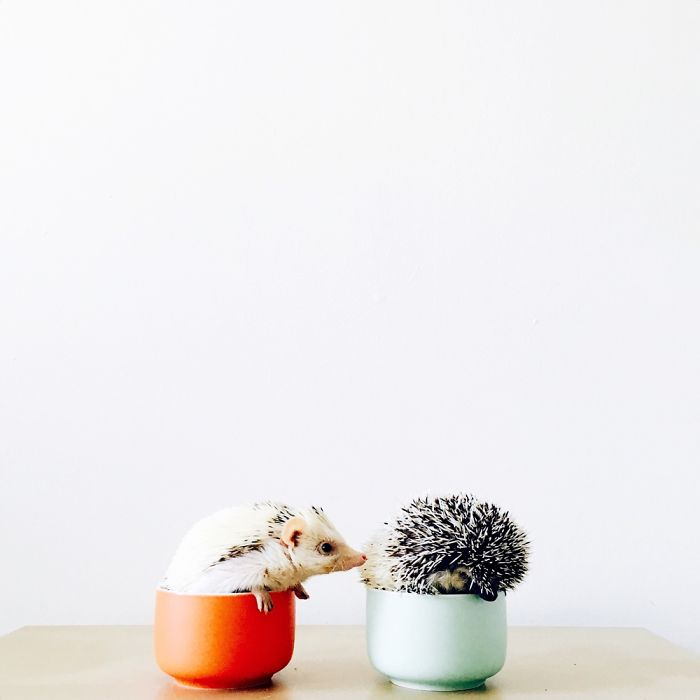 the-ordinary-lives-of-my-ordinary-hedgehogs-9__700