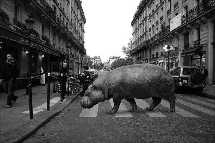 wild-animals-european-streets-ceslovas-cesnakevicius_2-700x466