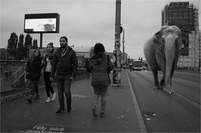 wild-animals-european-streets-ceslovas-cesnakevicius_3-700x465
