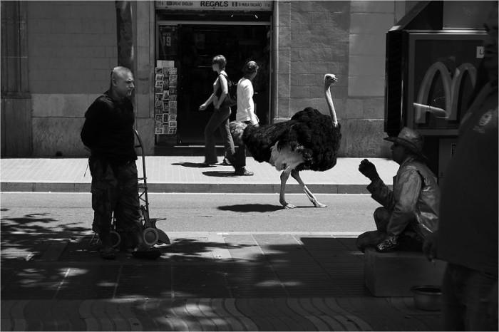 wild-animals-european-streets-ceslovas-cesnakevicius_7-700x466