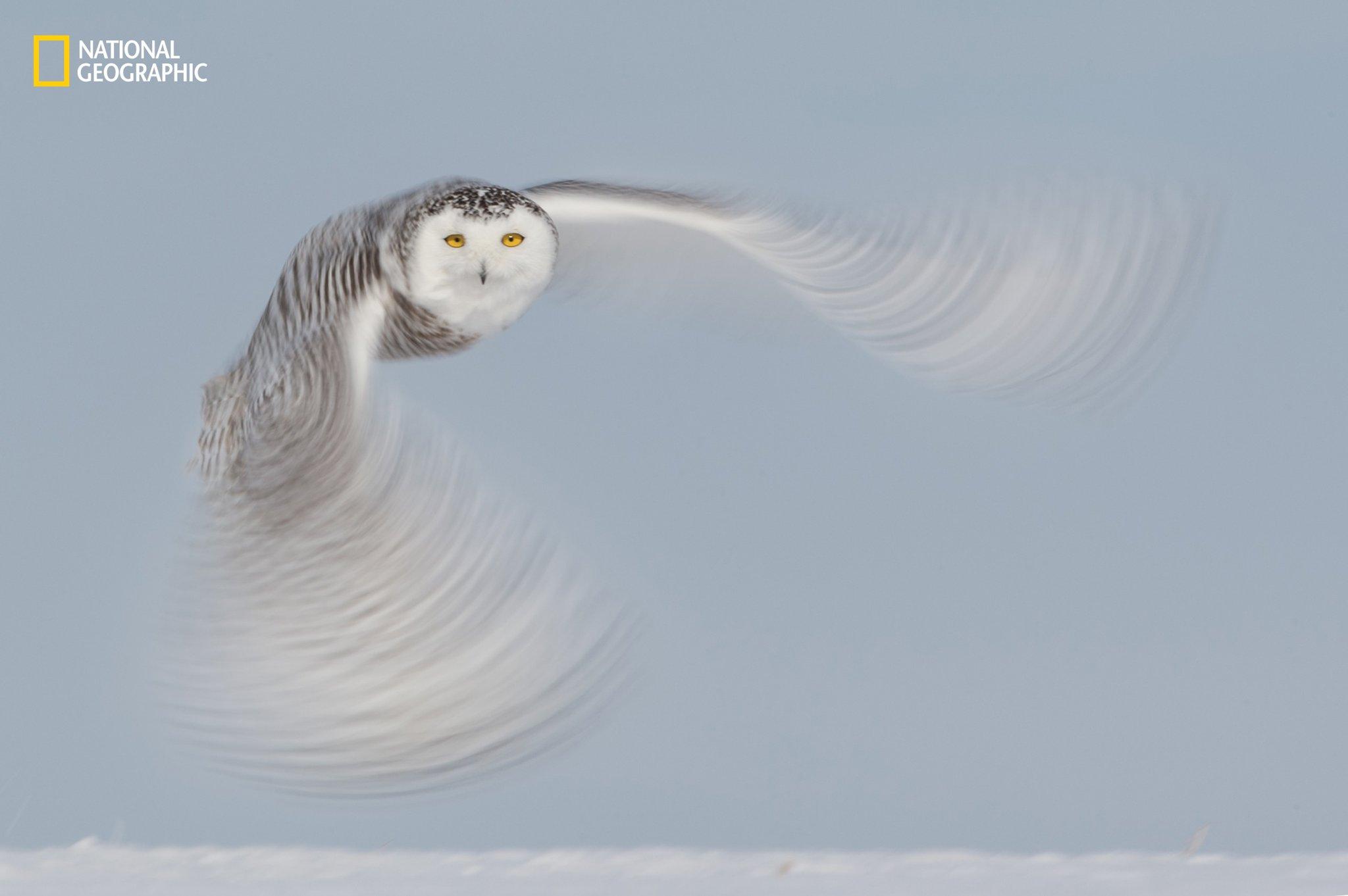 tundra-ghost