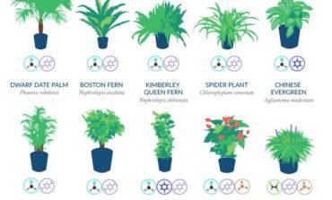 Evin havasını hansı bitkilər təmizləyir? | NASA tərəfindən təqdim olunan siyahı