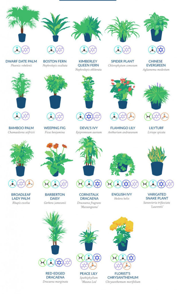 houseplants4
