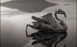 Natron Gölünün dəhşətli suyu: Toxunan canlı daşa çevrilir