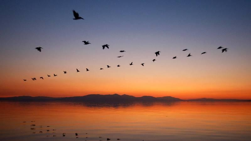 Köçəri quşlar