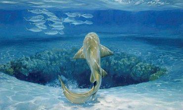 Mariana Çuxurunda yazılan səslər, yeni dəniz canlısının varlığına işarə ola bilər
