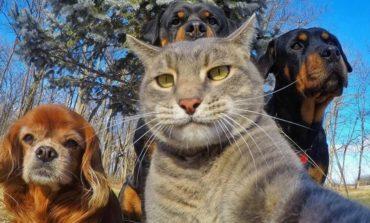 Dörd ayaqlı bir selfie mütəxəssisi: Pişik Manny