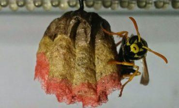 Arıların rəngli yuvası - eksperiment