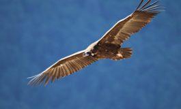 Azərbaycan quşları