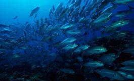 Balıqlar haqqında maraqlı məlumatlar