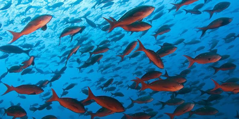 Balıqlar haqqında
